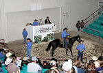Hagan Horse Sale showing off the best